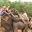Small_elephant_tour
